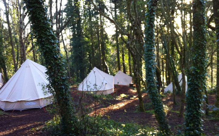 woodland-mindfulness-at-sharpham-trust-2