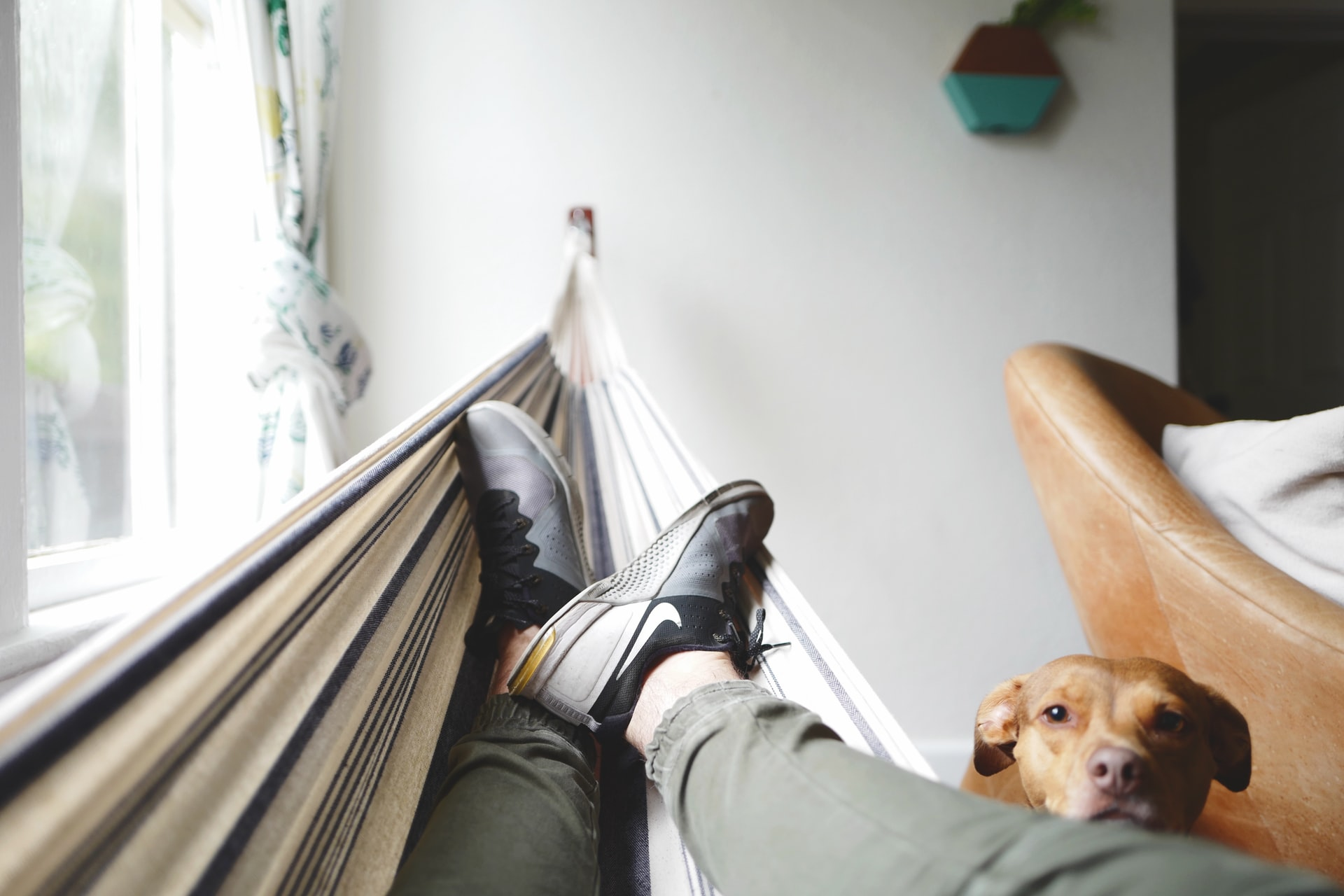 man resting with his dog at home in a hammock