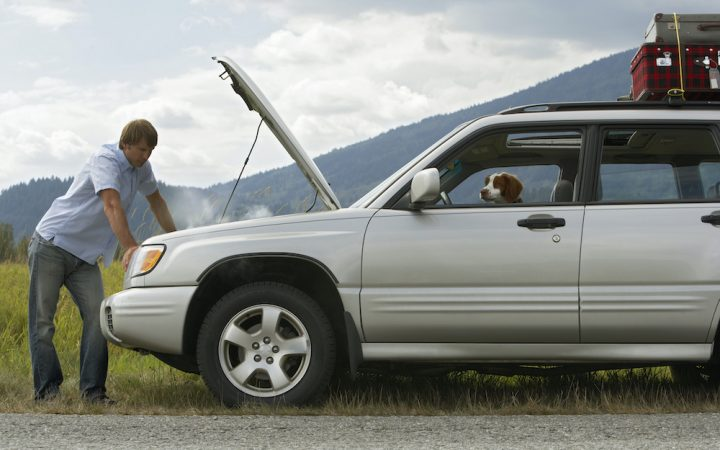 man checking his car whilst out driving with his dog